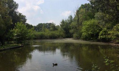 Inquinamento dell'acqua della Vernavola: fogna a cielo aperto