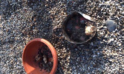 Bombe a mano nel giardino della pensionata di Mortara