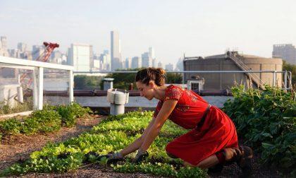 """Nuovi """"orti urbani"""" per favorire l'aggregazione sociale e l'agricoltura sostenibile"""