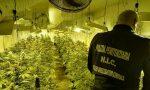 Scoperta piantagione di marijuana in un capannone