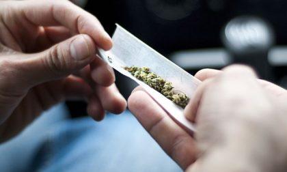 Trovato positivo alla cannabis alla guida dell'auto: assolto