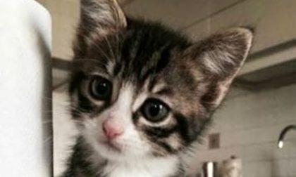 Gattina bastonata e impiccata vergogna a Salice Terme