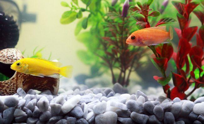 Acquario tropicale in casa o pesci rossi nella boccia - Acquario in casa ...
