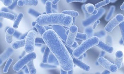 Legionella come prevenire il contagio