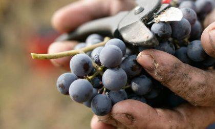 "SOS Vendemmia: ""Tamponi gratis a braccianti agricoli rumeni e bulgari"""