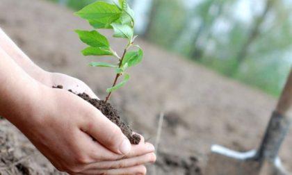 """Giornata dell'Albero, Villani: """"Una proposta per promuovere il verde e combattere l'inquinamento urbano"""""""