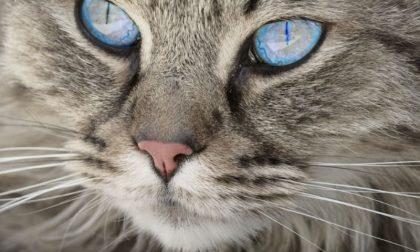 I gatti più belli del Mondo, oggi e domani, a Mortara