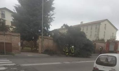 Vento forte: pino cade su furgone in viale Campari