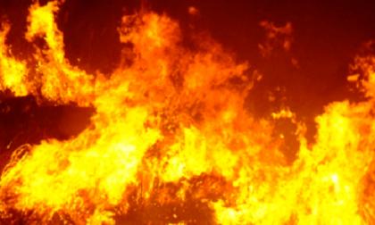 Incendio nel parco del Ticino: piromani in azione