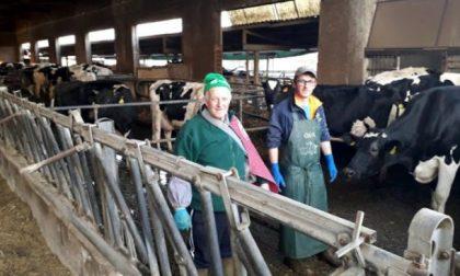 Raid in un allevamento: ignoti giustiziano sei vacche e sversano tutto il latte