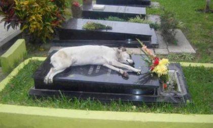 Cani e gatti seppelliti con i padroni: Palazzo Chigi frena la Lombardia