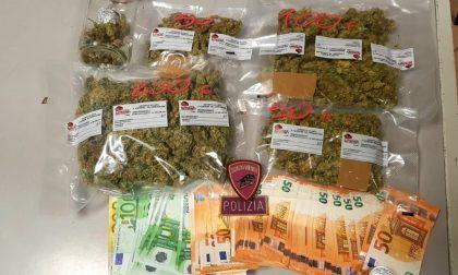 Arrestato studente spacciatore, aveva mezzo chilo di marijuana