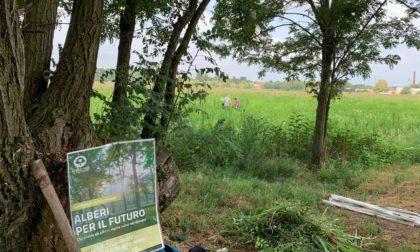 Commemorazione Iolanda Nanni: piantumazione di 200 nuovi alberi