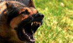 Netturbino azzannato da un cane mentre ritira i rifiuti
