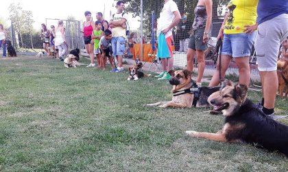 Dog Splash: l'evento benefico contro l'abbandono estivo dei cani