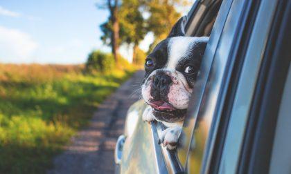 Viaggiare all'estero con gli animali: Ats fornisce le linee guida