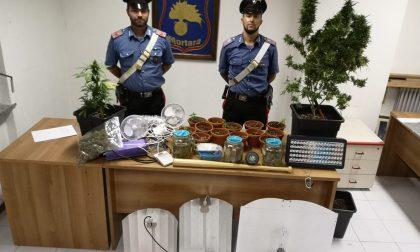 Coltivano marijuana nel ripostiglio di casa, denunciati marito e moglie