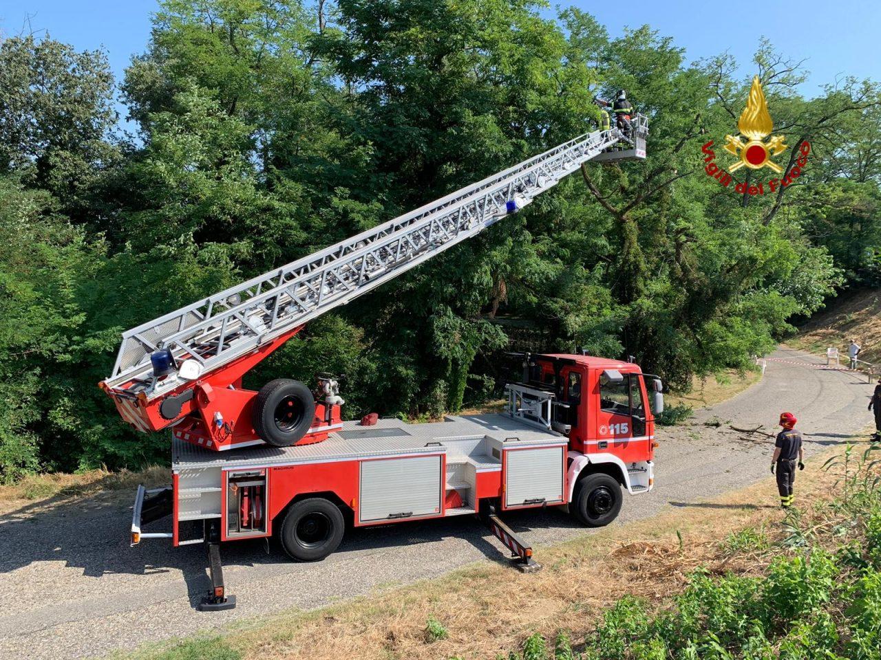 Canarazzo, i Vigili del fuoco di Pavia mettono in sicurezza un albero FOTO