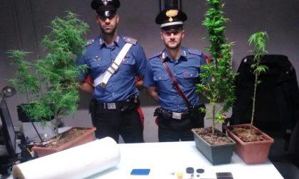 Trovati con mezzo chilo di hashish, piante di marijuana e una pistola: arrestata coppia di spacciatori