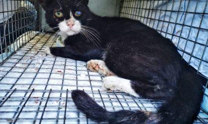 Colonia felina decimata a Velezzo Lomellina: confermata la presenza di veleno nelle esche