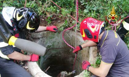 Cane cade in un pozzo profondo 15 metri: salvato dai Vigili del Fuoco FOTO