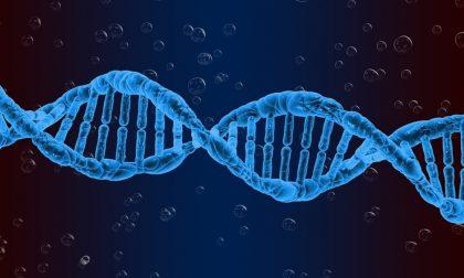 Università Pavia: dal DNA degli italiani informazioni per comprendere la genetica europea