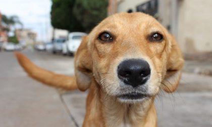 Cane trovato morto nel lago con un peso attaccato al collo