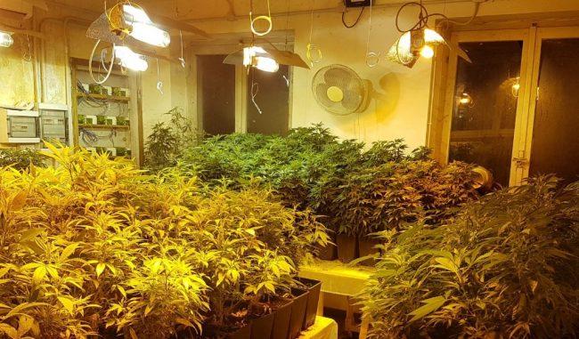 Laboratorio della droga in cascina: sequestrate oltre 660 piante di marijuana VIDEO