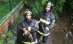Rex il chihuahua torna a casa grazie ai Vigili del fuoco