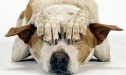 Botti a capodanno: ecco come aiutare i nostri animali ad avere meno paura