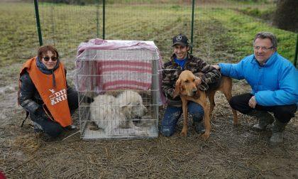 Il cane Barnaba è stato recuperato: ora lo aspetta una nuova famiglia