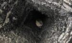 Gatto intrappolato nel camino: liberato dai Vigili del Fuoco FOTO