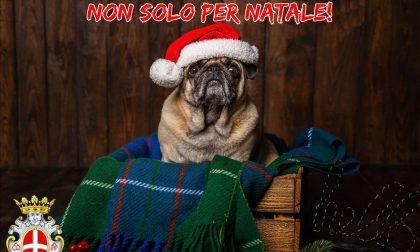 Un cane è per la vita, non solo per Natale