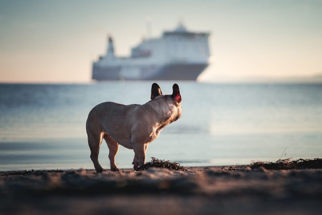 Viaggiare con animali, le regole da rispettare