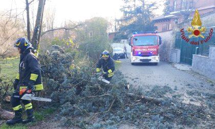 Vento forte, alberi caduti e rami pericolanti: intervengono i Vigili del Fuoco