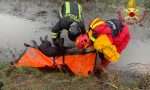 Cane ferito in difficoltà in fossato pieno di fango, salvato dai Vigili del Fuoco FOTO