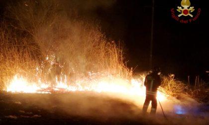 Vasto incendio nella notte a Mede, in fiamme bosco e canneto FOTO
