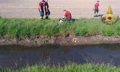 Il piccolo Zack cade in un canale, arrivano i Vigili del Fuoco e lo salvano