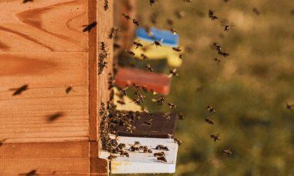 Rubano oltre 30 arnie contenenti api: colpo da 10mila euro in azienda agricola