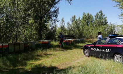Sgominato traffico illecito di alveari: trafugate 43 arnie
