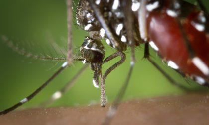 Pavia dichiara guerra alla zanzara tigre
