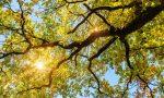 Salviamo i boschi di quercia lombardi: un progetto di ricerca dell'Università di Pavia