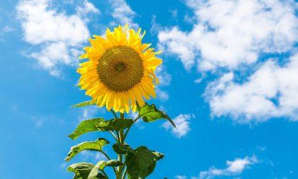 Weekend estivo: tempo soleggiato e graduale rialzo termico | Meteo Lombardia