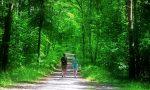 Pavia: da luglio a ottobre escursioni gratuite nelle foreste regionali con guide