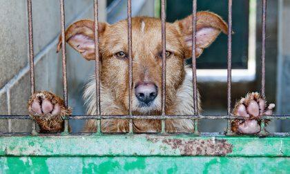 Cani abbandonati sul balcone sotto il sole, senza cibo nè acqua: liberati