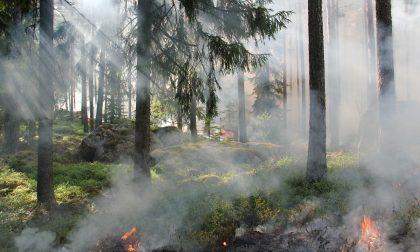 Appicca il fuoco a delle sterpaglie: denunciato 71enne