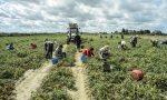 Nuovo focolaio Covid: 97 positivi in azienda agricola Lombarda