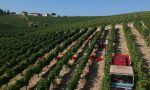 Terre d'Oltrepò e La Versa: al via la vendemmia 2020