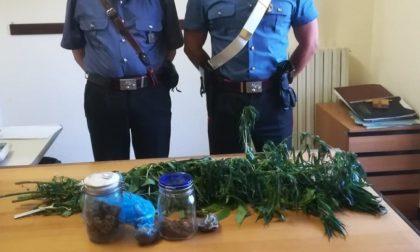 Coltiva marijuana sul balcone: 6 rigogliose piante alte circa un metro e mezzo