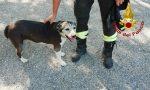 Cagnolina incastrata in una buca e salvata dai Vigili del fuoco